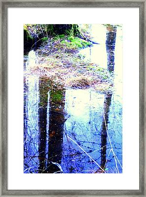 Climbing The Mirror Trees Framed Print