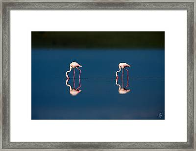 Mirrored Flamingos Framed Print by Jeppsson Photography