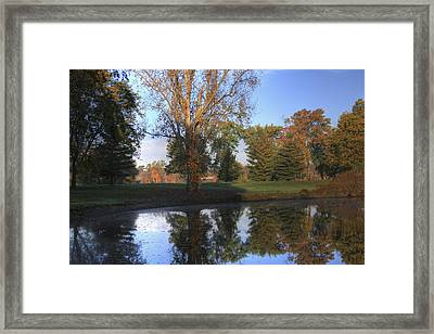 Mirrored Pines Framed Print