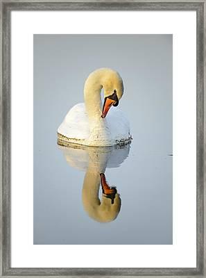 Mirroring Swan Framed Print by Andy-Kim Moeller