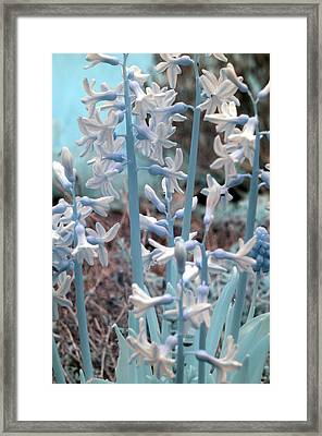 Framed Print featuring the photograph Misc. Infrared by Rebecca Parker