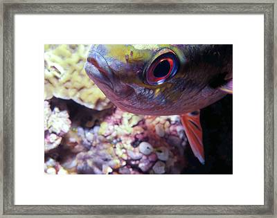 Miscellaneous Fish 5 Framed Print by Dawn Eshelman