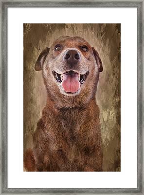 Misha Framed Print by Barbara Manis