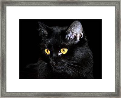 Miss Anastasia Framed Print