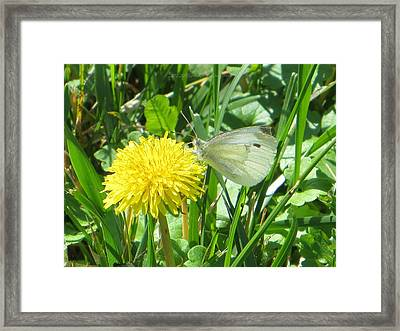 Miss Busy Butterfly Framed Print