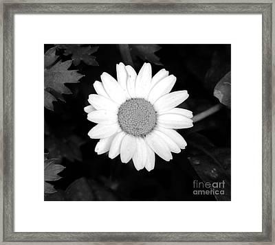 Miss Daisy Framed Print by Andrea Anderegg