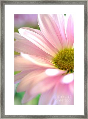 Miss Daisy Framed Print by Deb Halloran