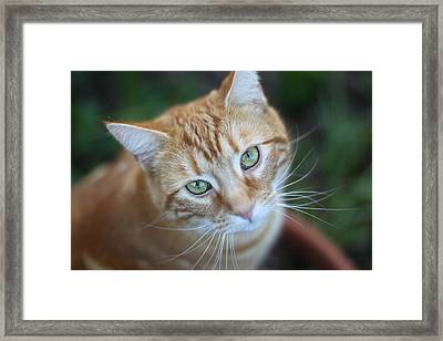 Miss Lucy Mcgillicuddy Framed Print by Melanie Lankford Photography
