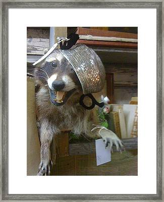 Miss Raccoon Framed Print by Linda L  Brobeck