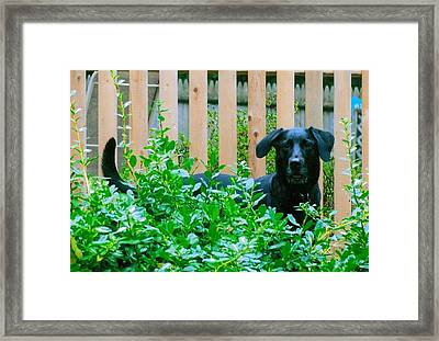 Miss You Riley Framed Print by Laura Lee Zanghetti
