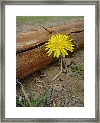 Missed Beauty Framed Print by Jeremy Donnell