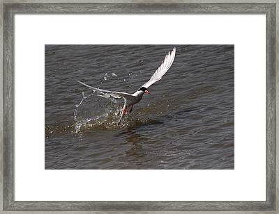 Missed The Fish Framed Print