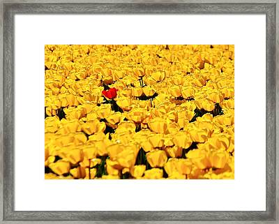 Missed The Yellow Memo Framed Print by Benjamin Yeager