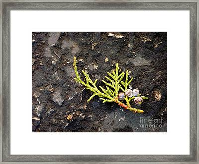 Framed Print featuring the photograph Missing Christmas by Meghan at FireBonnet Art