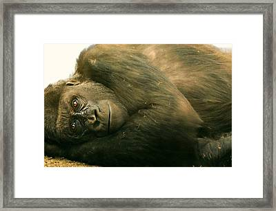 Missing My Friend Framed Print by Diana Angstadt