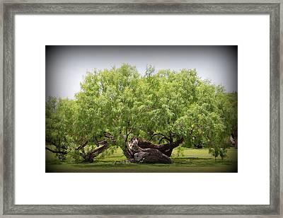 Mission Espada - Tree Framed Print