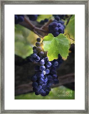Mission Grapes II Framed Print by Sharon Foster
