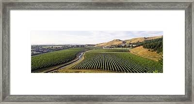 Mission Vineyard, Hawkes Bay North Framed Print by Panoramic Images