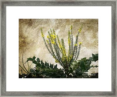Framed Print featuring the photograph Mission Wallflower by Ellen Cotton