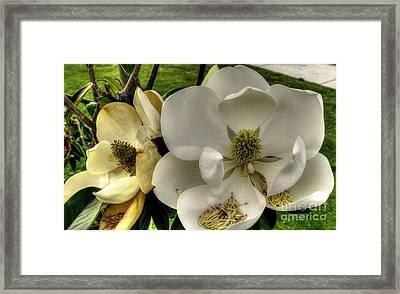 Mississippi Magnolia Framed Print