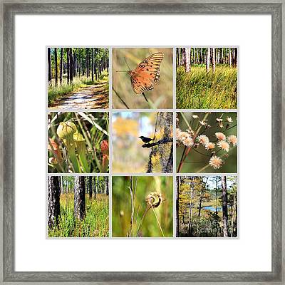 Mississippi Nature Collage Framed Print by Carol Groenen