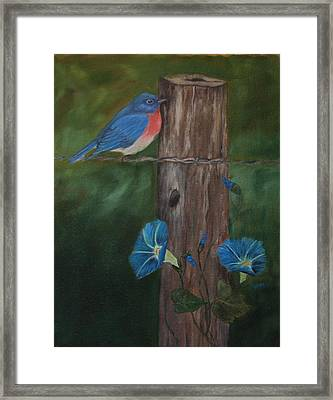 Missouri Blue Bird II Framed Print