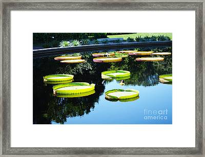 Missouri Botanical Garden Giant Lily Pads Framed Print by Luther Fine Art
