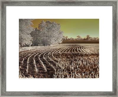 Missouri Corn Field Framed Print by Jane Linders