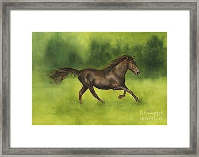 Missouri Fox Trotter Horse Framed Print by Nan Wright
