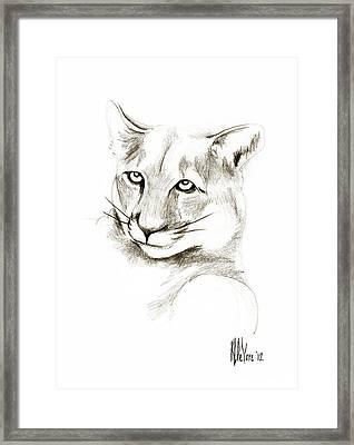Missouri Mountain Lion II Framed Print by Kip DeVore