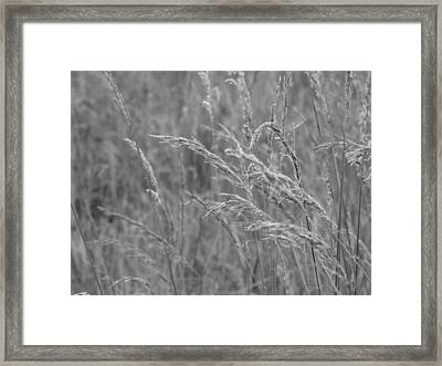 Mist Catcher Framed Print by Tim Good