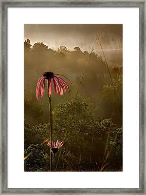 Mist On The Glade Framed Print by Robert Charity