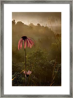 Mist On The Glade Framed Print