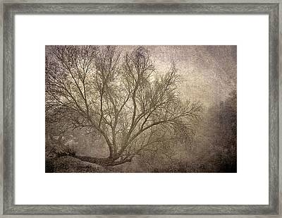 Mist Tree Framed Print by Guido Montanes Castillo