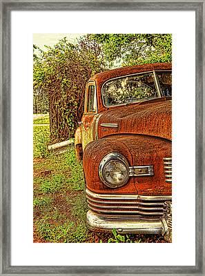 Mister Brown Framed Print by Toni Hopper