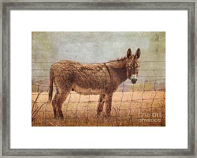 Mister Cool Framed Print by Betty LaRue
