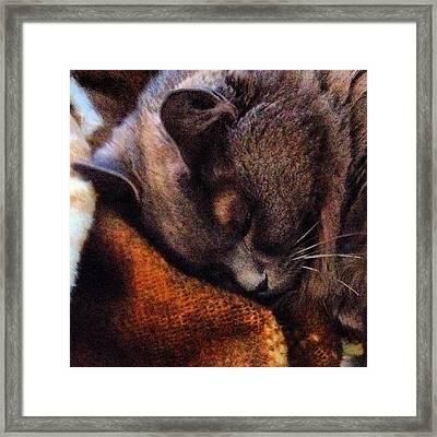 Misty Catnapping...#cat #kitten Framed Print