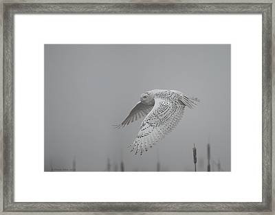 Misty Day Snowy Framed Print by Daniel Behm