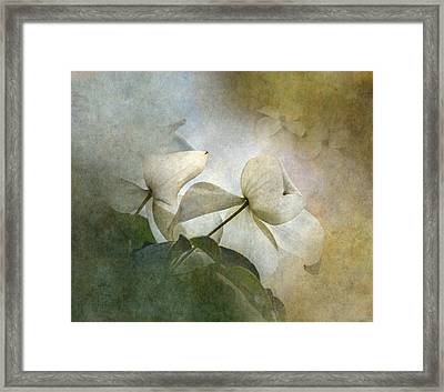 Misty Dogwood Framed Print