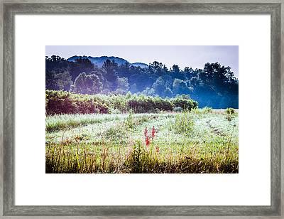 Misty Field In Blue Ridge Mountain Farmlands Framed Print by Mela Luna