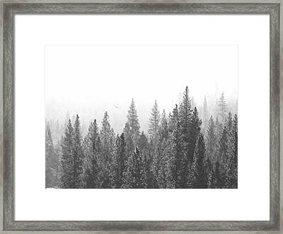 Misty Flight In The Forest Framed Print by Frank Wilson