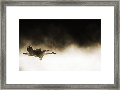 Misty Flight Framed Print
