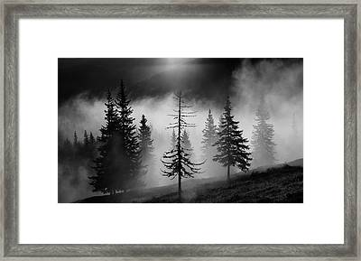 Misty Forest Framed Print