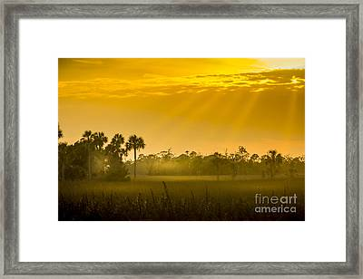 Misty Glade Framed Print