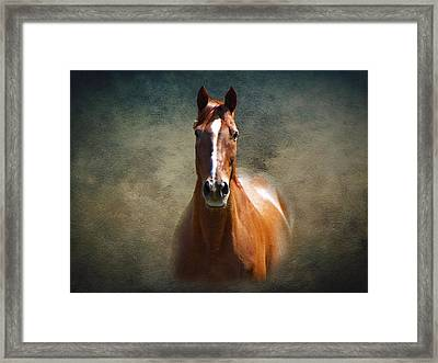 Misty In The Moonlight Framed Print