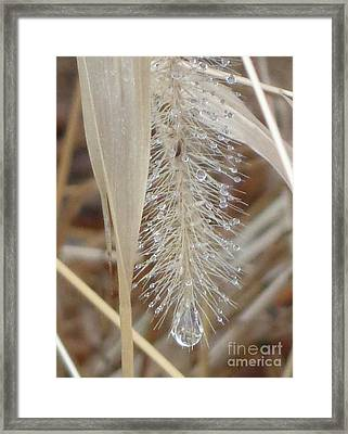Misty Jewel Framed Print