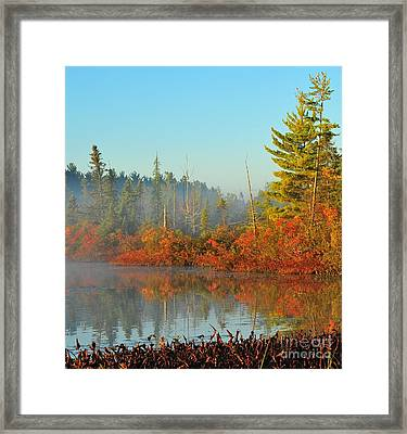 Misty Marsh Framed Print by Terri Gostola