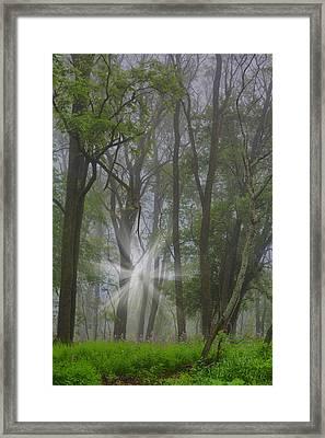 Misty Meadow Framed Print