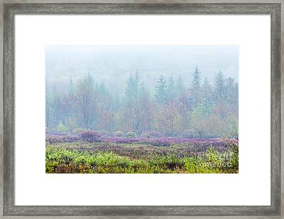 Misty Meadow In Acadia Framed Print by Susan Cole Kelly