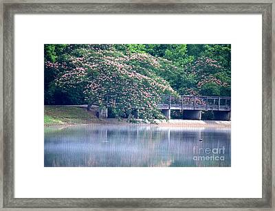 Misty Mimosa Reflections Framed Print by Maria Urso